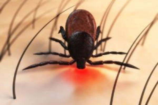 Morso di zecca e malattia di Lyme